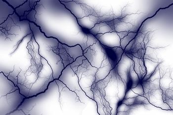 神経.jpg